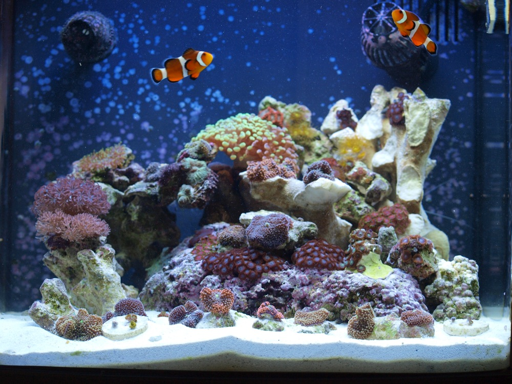 Ux Designer S Biocube 14 All In One Tanks Nano Reef